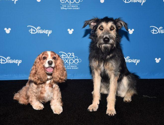 Fotos de Primer Avance, Póster y Foto de La Dama y el Vagabundo, Película para Disney Plus