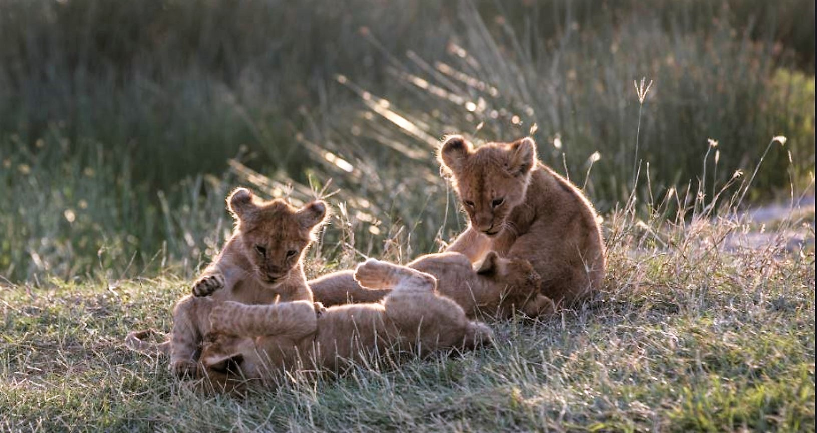 Foto de National Geographic Celebra el Día Internacional de la Tierra con Varios Documentales