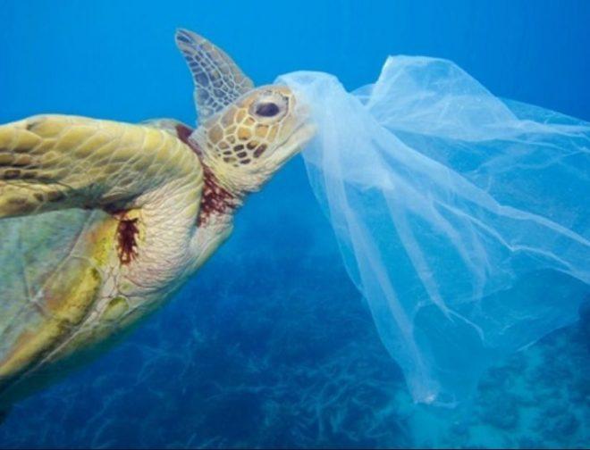 Fotos de 4 Datos que no sabías sobre el impacto de las Bolsas de Plástico en el planeta