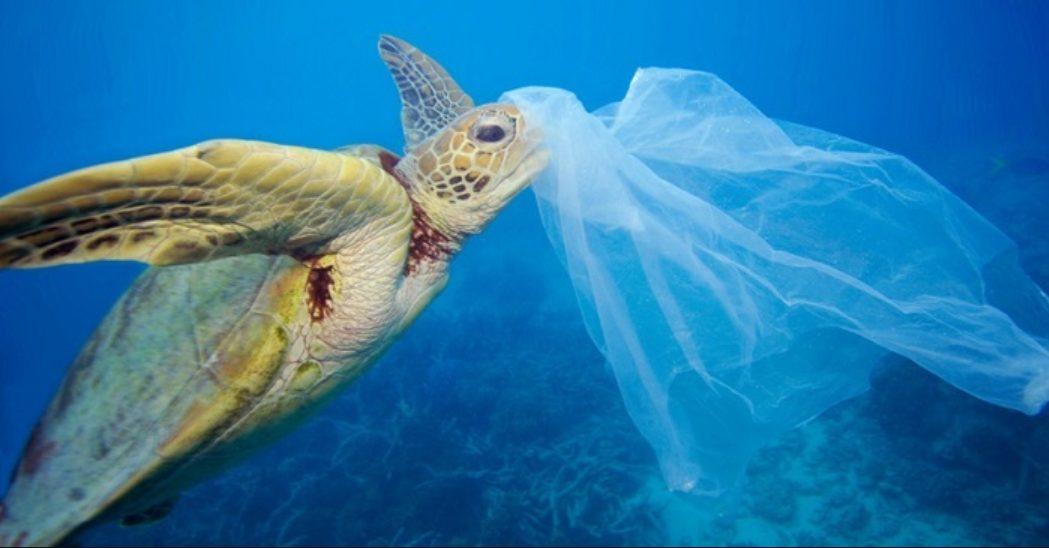 Foto de 4 Datos que no sabías sobre el impacto de las Bolsas de Plástico en el planeta